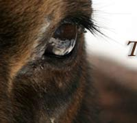 Moose Eyes http://fortunatewilderness.com/